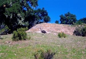 What? An emu!
