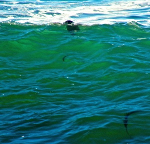 A otter floating on emerald waves